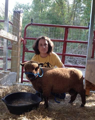 Brown (black) Babydoll Southdown Ram, born 3/2013